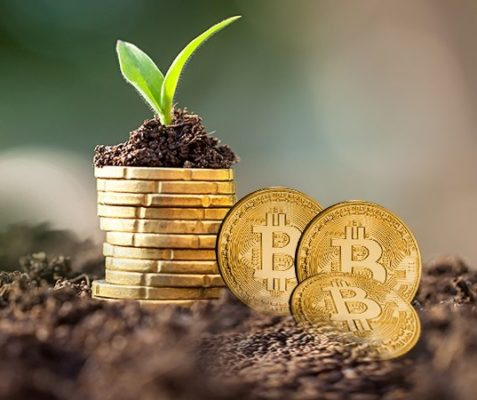 Physical Bitcoin BTC coins next to seedling in soil